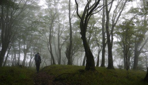 鍋割山:霧が漂うブナ林を登る&鍋焼きうどん