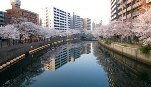 大岡川プロムナード:桜を見ながらお散歩