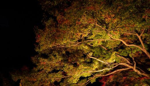 御岳渓谷:紅葉ライトアップを見に行く