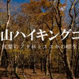 三国山ハイキングコース:紅葉のブナ林とススキの群生