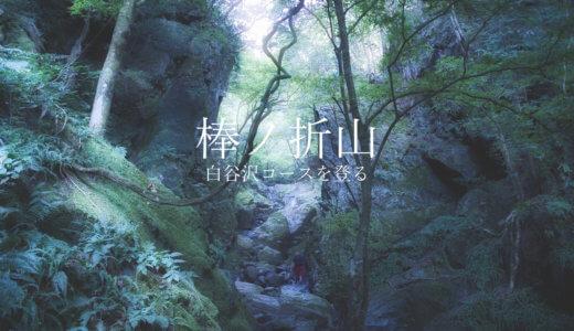 棒ノ折山:白谷沢コースで沢登りを楽しむ